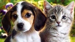 Kedi ve Köpek yiyen kadın yeniden yakalandı!