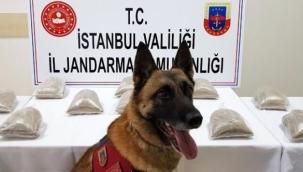 Dedektör Köpek Atak Suçlulara Göz Açtırmıyor.